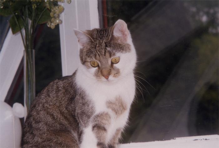 katzen-kleintierpension