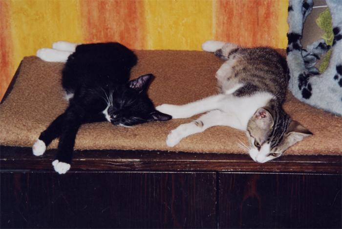 katzen-kleintierpension4